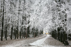 Walkway in snowy autumn park Stock Photography