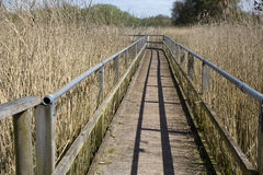 Walkway at the Somerset wetlands wildlife reserve Royalty Free Stock Image