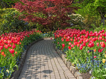 Walkway in a spring garden. Walkway in the spring gardens among flowerbeds with tulips Royalty Free Stock Photo