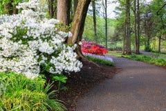 Walkway Through Spring Garden Stock Image