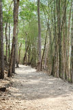 Walkway. Stone walkway in bamboo forest Royalty Free Stock Image