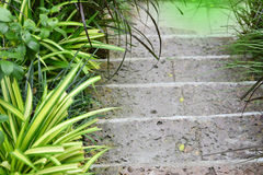 Walkway or stone stairs in the green garden Royalty Free Stock Photography