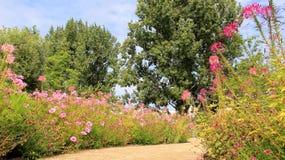 Walkway In Summer Garden With Blooming Flowers Stock Photo