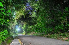 Walkway surrounded by lush greenery Stock Photography