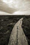Walkway in a swamp in Estonia Royalty Free Stock Images