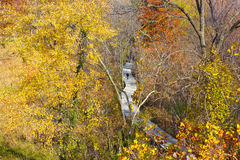 A walkway on Theodore Roosevelt Island Park and colorful trees in autumn, Washington DC. Royalty Free Stock Image