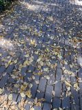 Walkway. Tiled path in the park with fallen autumn leaves Royalty Free Stock Photos