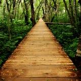 Walkway till och med skog arkivfoto