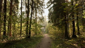 Walkway to abandoned kids camp in the forest. Autumn daytime. Smooth dolly shot.  stock video