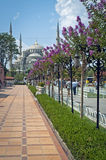 Walkway to the Blue mosque. In Istanbul royalty free stock photography