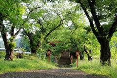 Walkway to Chureito Pagoda, Arakura Sengen Shrine  Stock Photos