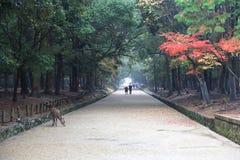 Walkway to Kasuga Taisha in Nara, Stock Photo