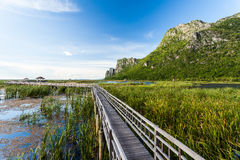 Walkway in to the lake Royalty Free Stock Image