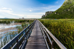 Walkway in to the lake Royalty Free Stock Photography