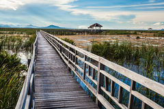 Walkway in to the lake Royalty Free Stock Photo