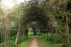 Walkway with tree arch Royalty Free Stock Image