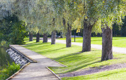 Walkway and trees alley in summer Royalty Free Stock Photos