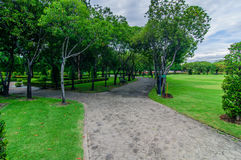 Walkway and trees filed in the garden. Royalty Free Stock Photo