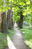 Walkway with trees Royalty Free Stock Photos