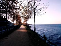 A walkway between trees and beside the sea. royalty free stock photos