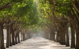 Walkway with trees in symmetry on both sides stock photo