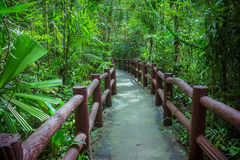 Walkway through the treetops in a rainforest Royalty Free Stock Image