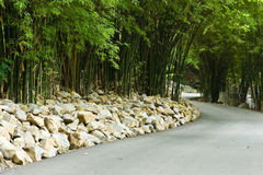 Walkway in tropical bamboo forest Royalty Free Stock Photos