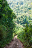 Walkway in tropical forest Stock Images