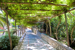 Walkway Under Arbor. A stone walkway under a grape arbor Royalty Free Stock Photo