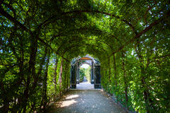 Walkway under a green natural tunnel Royalty Free Stock Image