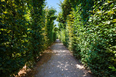 Walkway under a green natural tunnel Royalty Free Stock Photos