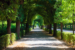 Walkway under a green natural tunnel Stock Image