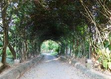 Walkway under long metal pergola Royalty Free Stock Images