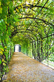 Walkway under ornamental climbing plants at Schonbrunn Palace Stock Image
