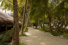 Walkway under palm trees Royalty Free Stock Photos