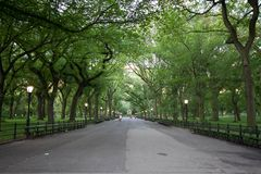 Walkway under the trees at Central Park in summer Royalty Free Stock Photography