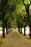 Walkway under the trees. A walkway under the trees in a park in Vittel in France Royalty Free Stock Photography