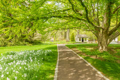 Walkway under the trees. Shaded walkway surround by colorful flowers and greenery Royalty Free Stock Images