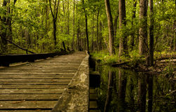 Walkway Through Wetlands Royalty Free Stock Images