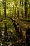 Walkway Through Wetlands. A walkway through the wetlands at Mt. Briar Wetlands, Washington County Maryland stock image