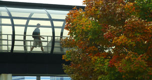 Walkway of Windows. College student walking through a glass walkway on a college campus in autumn Stock Photo