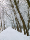 Walkway at the winter Royalty Free Stock Photography