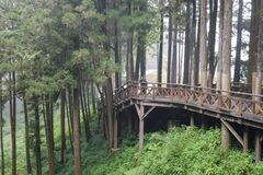 The walkway from wood in Alishan forest at Alishan national park, taiwan.Orange light tone