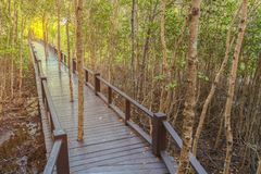 The walkway at the wood stock photography