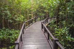 The walkway at the wood bridge in the forest royalty free stock photo