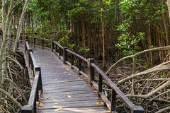The walkway at the wood bridge in the forest royalty free stock image