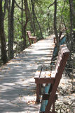 Walkway and wood chair mangrove forest. Royalty Free Stock Images