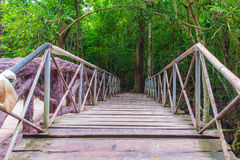 Walkway. Wooden bridge in the forests Stock Photography