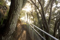 Walkway in wooden forest in Auckland stock photography