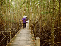 Walkway with wooden at Golden Meadow Prong, Thailand Royalty Free Stock Photography